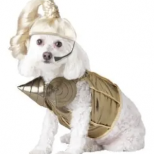 clearance pop queen dog costume