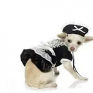 clearance french maid dog costume