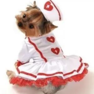 clearance cutie nurse dog costume