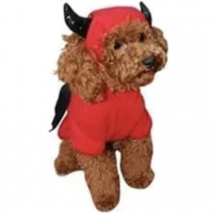 clearance bat dog costume