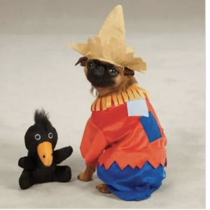 clearance scarecrow dog costume