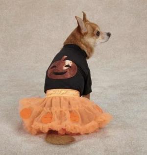 clearance pumpkin dog costume