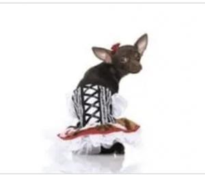 clearance heidi dog costume