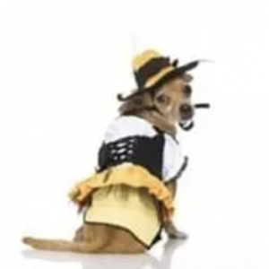 clearance kandy korn witch dog costume