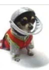 clearance sir barks a lot dog costume