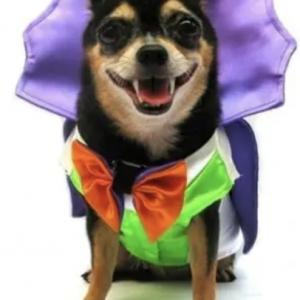 clearance dogula costume
