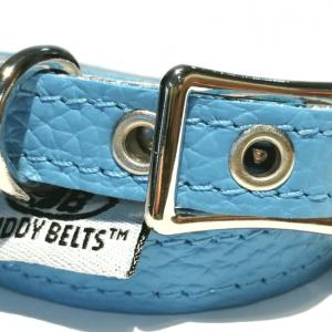premium buddy belt collar