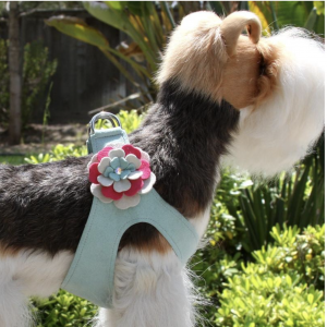 blossom flower step in dog harness